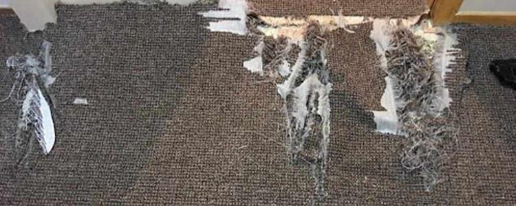 Best Carpet Repair Booragoon